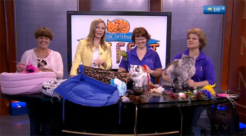 S&M Show Supplies for Cats & MikaSu Designs talk #YEGCatFest on CTV Morning Live Calgary.