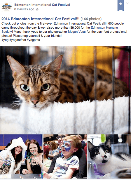 Cat Fest Photos