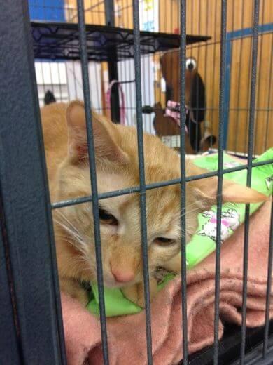 Cat Fest Examiner