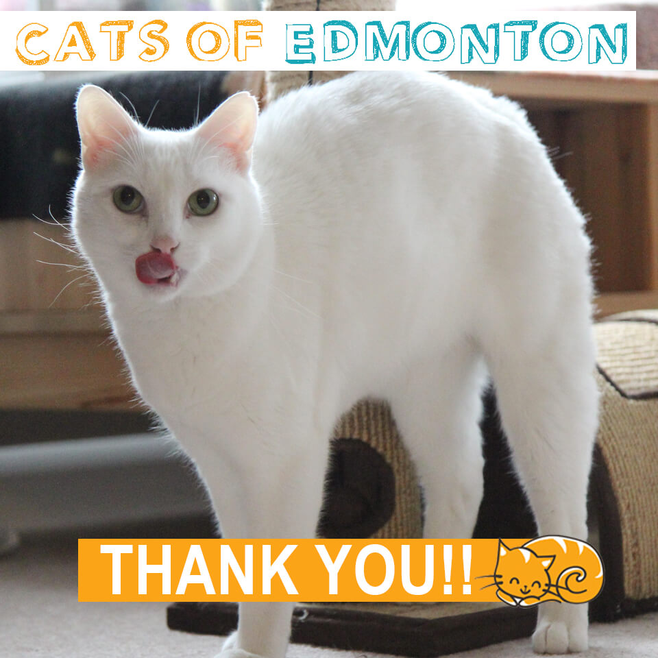 Cats of Edmonton Thank You!