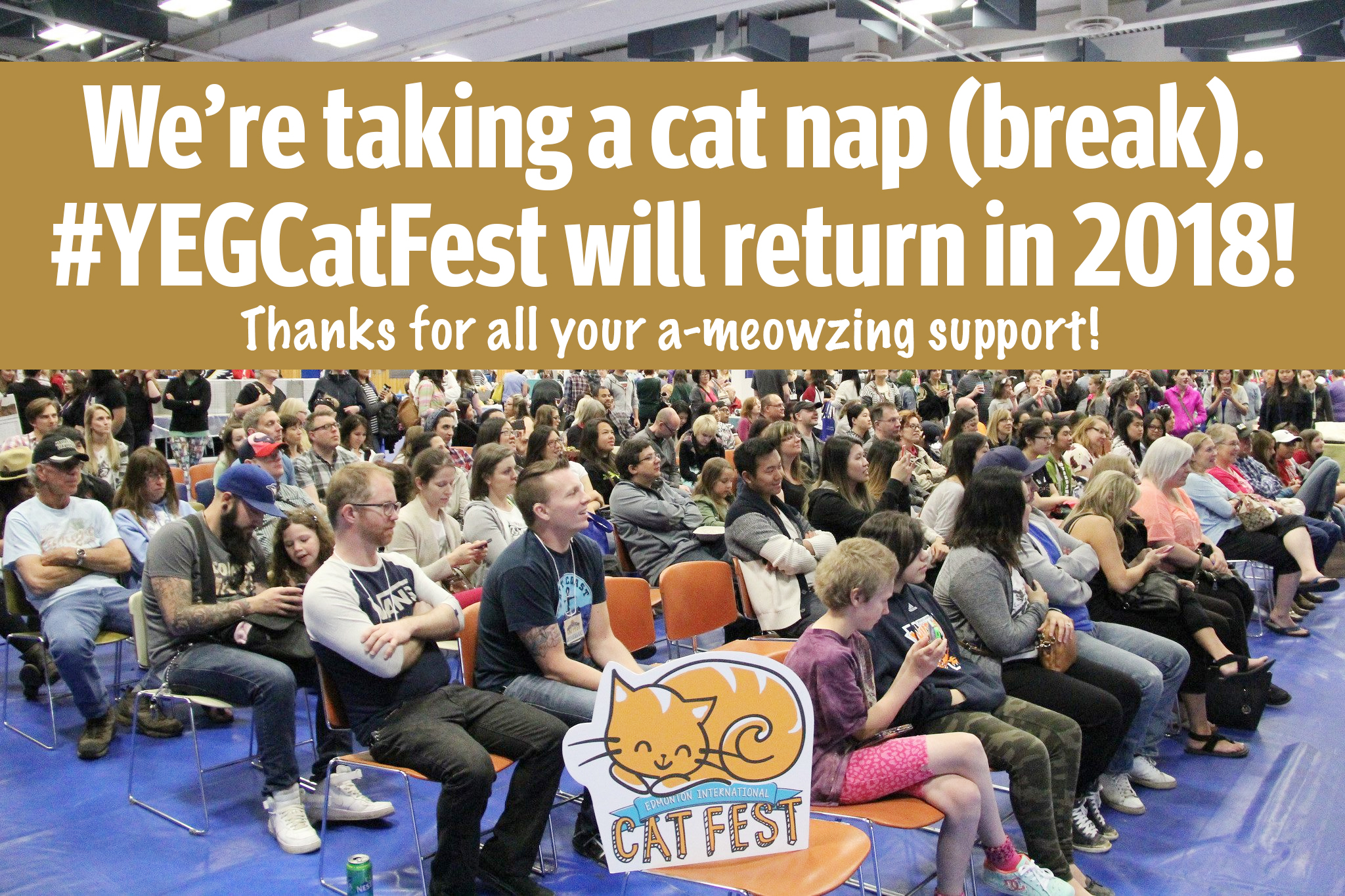 Cat Festival Break